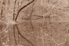 Tennessee Wood